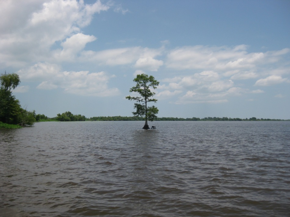 A lonely cypress in Lac des Allemandes